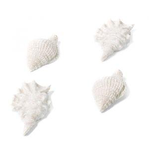 Plakbare schelpen (4st)