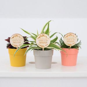 Plantenprikker strak met takjes en namen