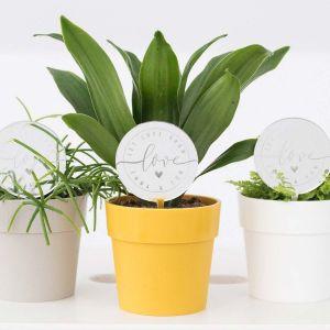 Plantenprikker love met hartje en namen