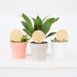 Plantenprikker geomatric floral