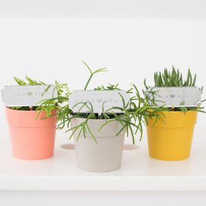 Plantenprikker modern paper