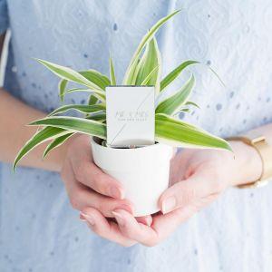 Plantenprikker Mr & Mrs chique