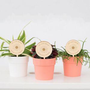 Plantenprikker Rustic love